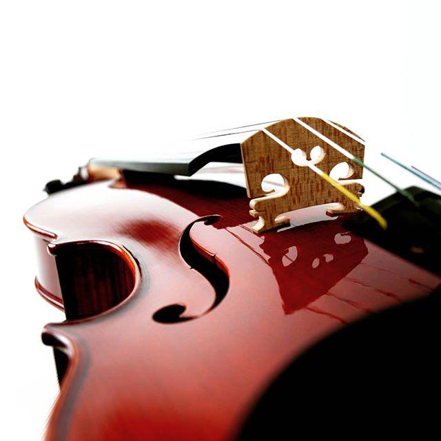 新作ヴァイオリン完成#violin #violino #ヴァイオリン #viola #ヴィオラ #cello #チェロ #doublebass #コントラバス